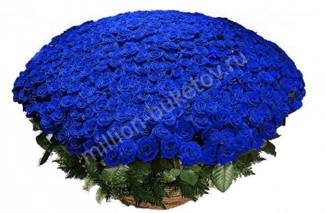 Заказать розу в симферополе
