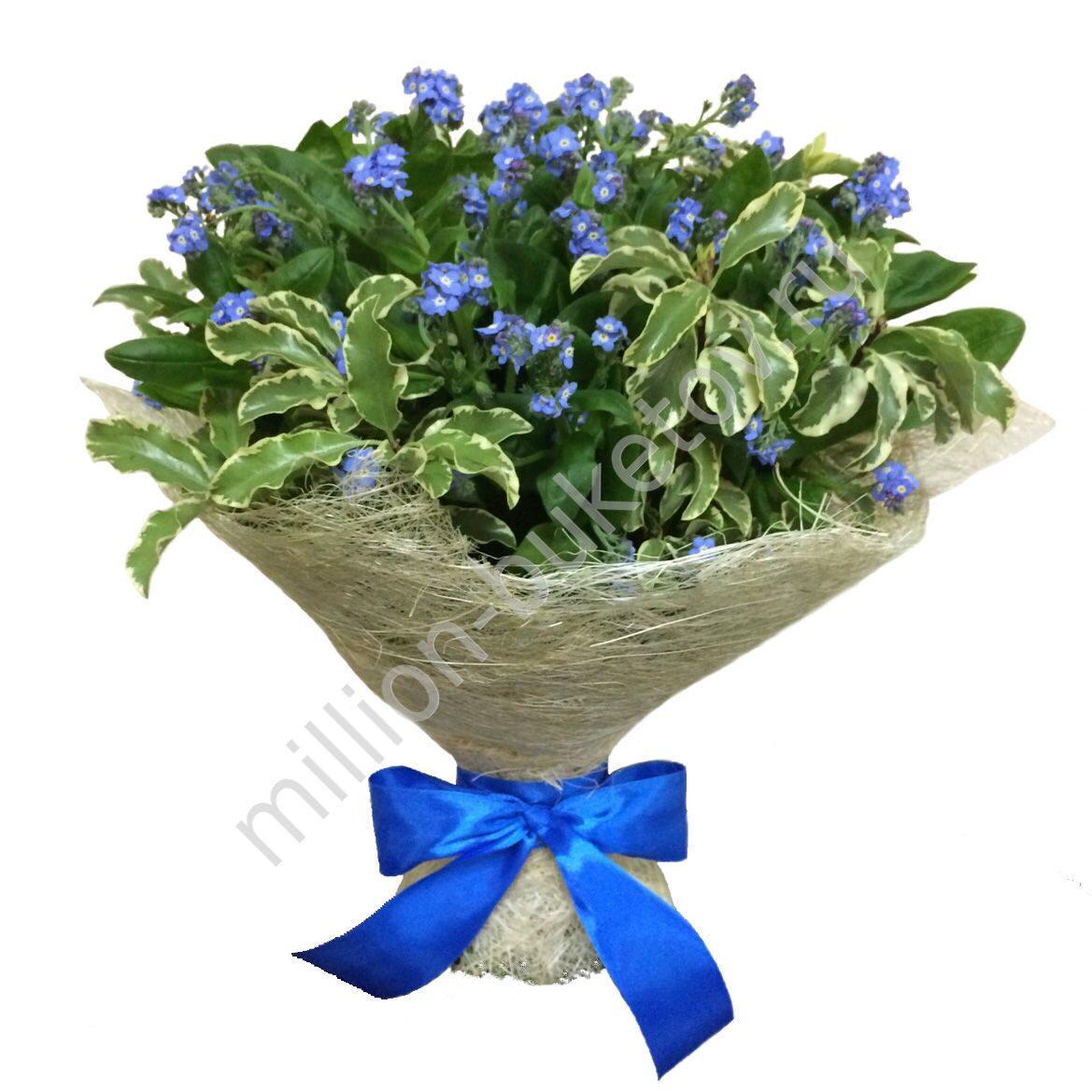 Незабудки купить москва цветы доставка цветов по черкассам