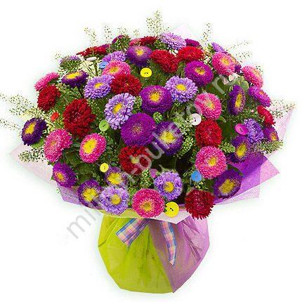Астры цветы купить