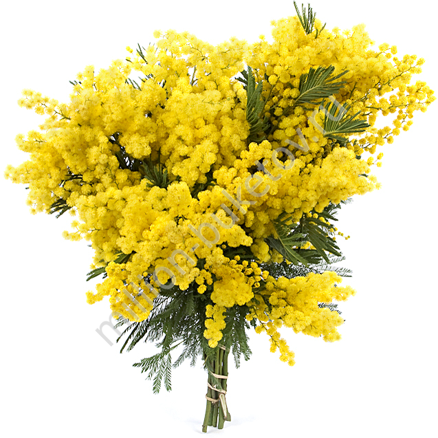 Купить букет из мимозы доставка цветов бульвар дмитрия донского