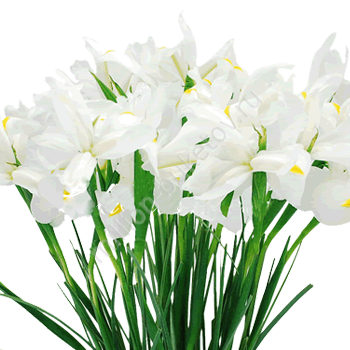 упаковка для цветов оптом в москве дешево форум