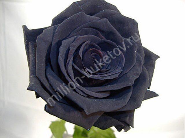 Декор черные розы