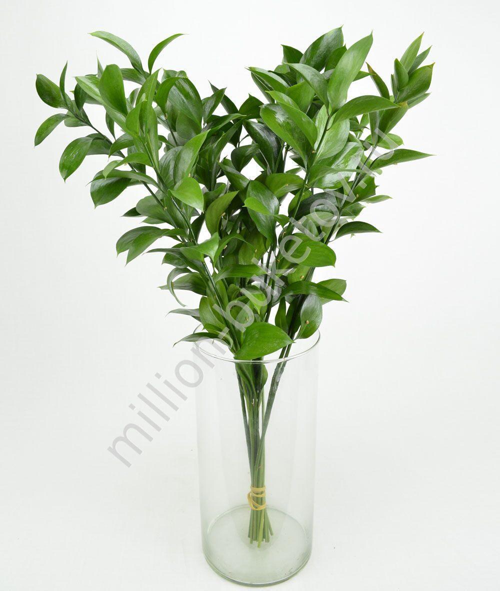 декоративная зелень для букетов названия и фото