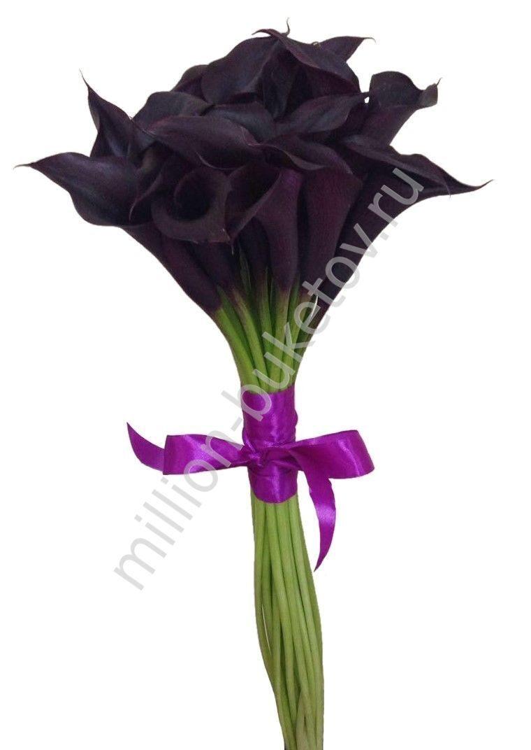 Магазин цветов букет подарочные с каллами фото
